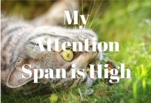 Attention Span Meme